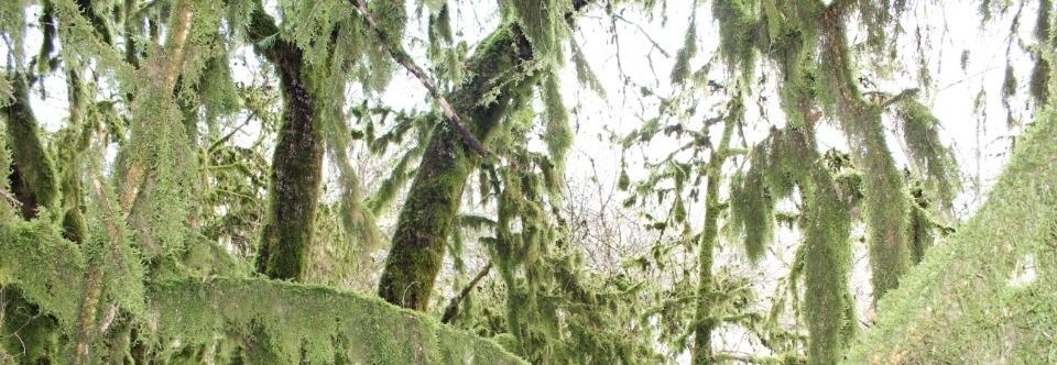 photo de couverture de dimo
